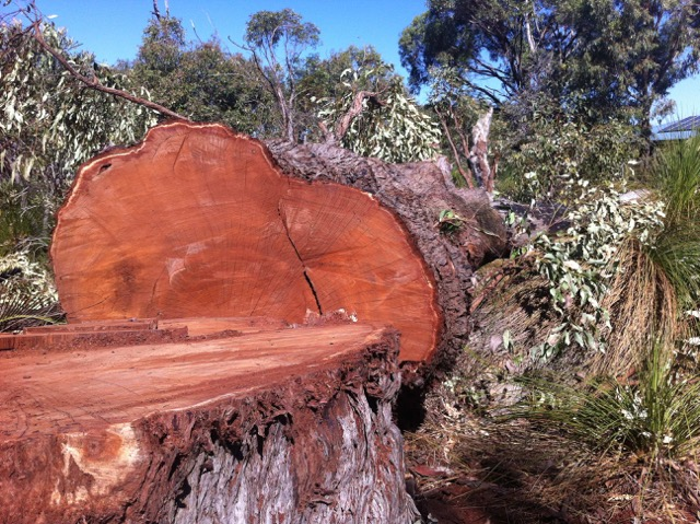 Photo 1 - king jarrah